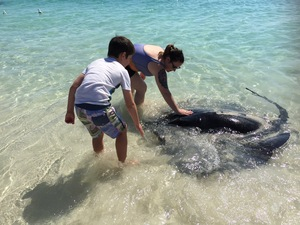 Things to do in Margaret River, visit Hamelin Bay Stingrays