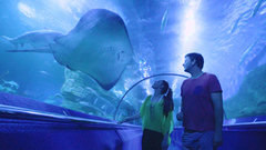 Take the whole family to discover AQWA for some of the best sights in Perth.