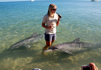 One of the best family activities in Western Australia is visiting the dolphins in Monkey Mia.