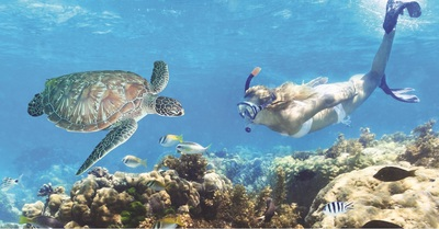Journey to Exmouth Western Australia and snorkel on the Ningaloo Reef