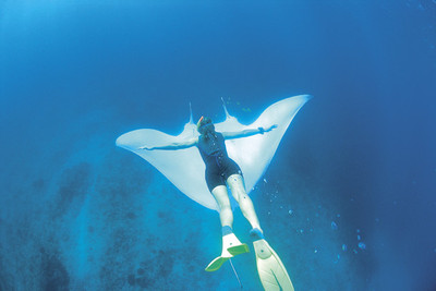 Snorkel or dive with manta rays in Coral Bay Western Australia