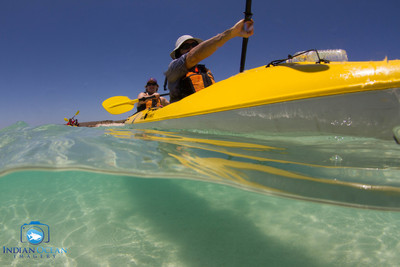 Book your Kayak tour with Sightseeing Pass to experience the most of Penguin Island