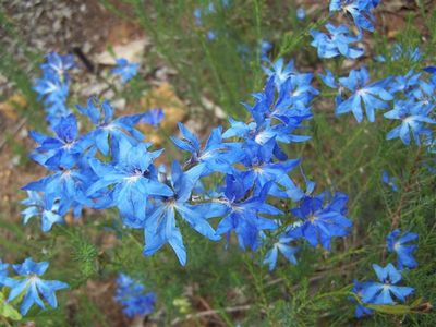 Let the local flora experts show you the best of the Western Australian wildflower extravaganza on a guided coach or walking tour
