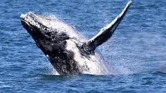 Enjoy whale watching from Perth or Fremantle