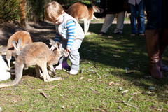 Buy a family attraction pass to keep the kids busy during your time in Perth