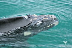 Learn more when you join a Whale Watching cruise with Naturaliste Charters.  Book today with Sightseeing Pass Australia