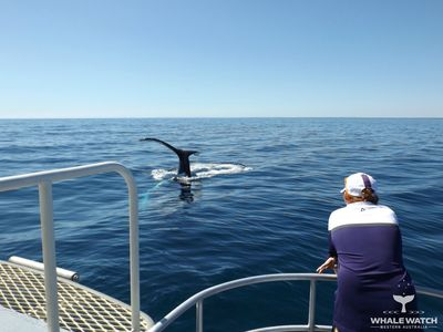 Our vessel is the largest and most luxurious Whale Watching vessel in Western Australia