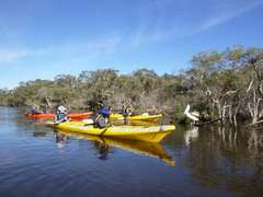 Canning river tour with Rivergods kayaking