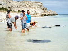 Giant Stingrays, Wildlife Eco Tour, Scenic Boat Cruise
