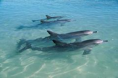 Visit the dolphins in Monkey Mia Western Australia with Sightseeing Pass