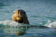 Visit the sea lions on this Dolphin, Penguin & Sea Lion Adventure Cruise