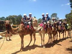 Camels and Native Wildlife Experience