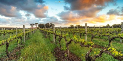 Margaret River Wine Tours with Perth Platinum Tours