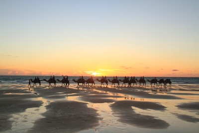 Stunning sunsets in Broome enjoyed best by booking a 1 hour Sunset Camel Ride with Sightseeing Pass Australia