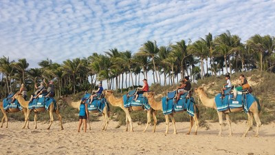 Happy Broome Camels ready for their morning walking tour along Cable Beach in Broome. Book with Sightseeing Pass to secure your seat