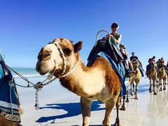 Jump on a camel ride on Broome's famous Cable Beach.  Book with Sightseeing Pass Australia