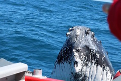 Whale Watching Tours in Dunsborough with Sightseeing Pass Australia