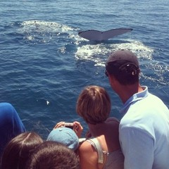 Whale Watching Tours in Perth Book Early with Sightseeing Pass Australia