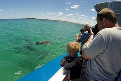 Penguin Island Wildlife Cruise is a must do when you visit Perth