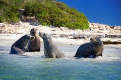 Penguin & Sea Lion Cruise can be booked with Sightseeing Pass Australia