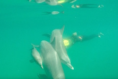 Get up close to wild dolphins on this swim book with Sightseeing Pass Australia