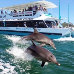 Mandurah Dolphin Cruise is only a short drive from Perth