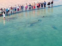 Meeting the dolphins at Monkey Mia on the Monkey Mia Spectacular Tour