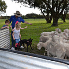 Meet the friendly farm animals on this tour.  Book today with Sightseeing Pass Australia.