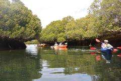 Book your Dolphin Sanctuary & Ships Graveyard Kayak tour with Sight Seeing Pass Australia