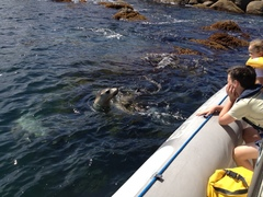 Get up close to the dolphins and more on this family friendly cruise. Book today with Sightseeing Pass South Australia