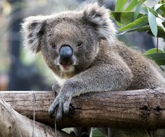 Purchase your entry to Adelaide Zoo with Sightseeing Pass South Australia