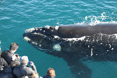 Albany Whaling Station, Whale Watching & Mammoth Cave Tour
