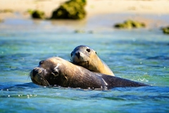 * FAMILY PASS * Penguin & Sea Lion Cruise, AQWA & Caversham Wildlife Park