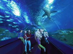SAVE 15% when you buy a Family Attraction Pass when you holiday in Perth