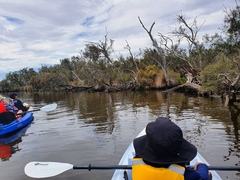 Canning River Kayaking Tours are a great way to see the birdlife and wetlands of the city.  Book online today with Sightseeing Pass Australia.