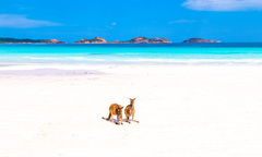 Tours of Esperance Book Today with Sightseeing Pass Australia.