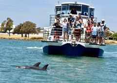 Experience Mandurah with a scenic dolphin and marine cruise.  Book your seat online today with Sightseeing Pass Australia.