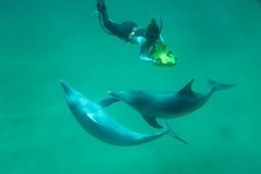 Weekend package Quest Rockingham and join a wild dolphin swim. Prices from $278 per person.  Book online today with Perth agent Sightseeing Pass Australia.