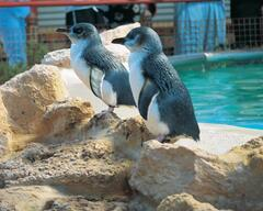 Family Packages staying at the Quest Rockingham and visiting Penguin Island, great for the kids!  Book online with Sightseeing Pass Australia today.