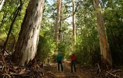 A Forest & Beach Eco Adventure Tour lets you discover Pemberton on this 4WD adventure.  Book with Sightseeing Pass Australia today to secure your spot.
