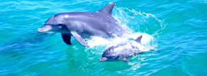 Things to do in Perth Dolphin Cruise