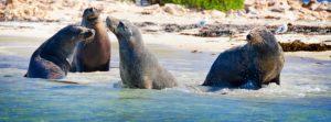 Penguin Island Wildlife Cruise, Western Australia