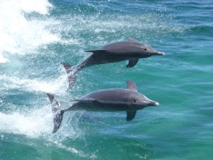 Dolphin Adventure Cruise