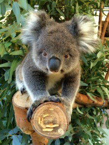 Get up close to native australian animals at Caversham Wildlife Park