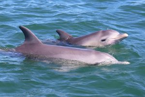 join a dolphin and canal cruise in mandurah