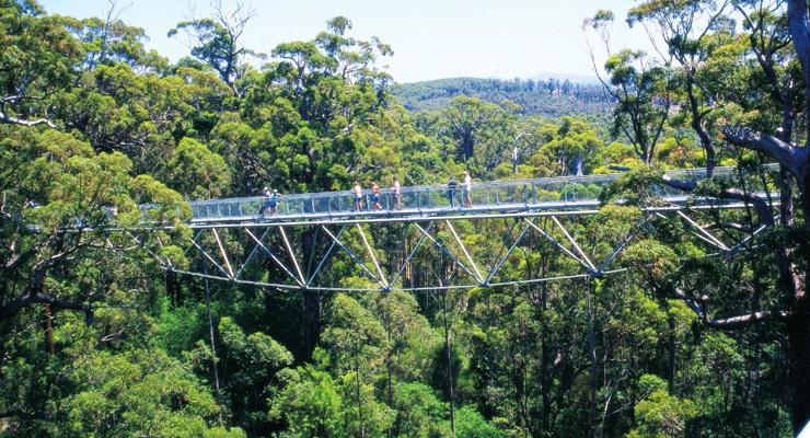 Valley of the Giants - Tree Top Walk