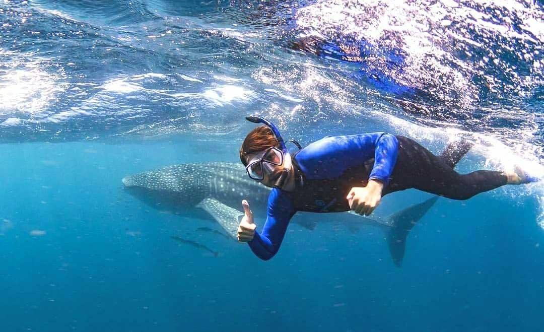 Ningaloo Swim with Whale Sharks