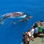 Whale Watching Western Australia