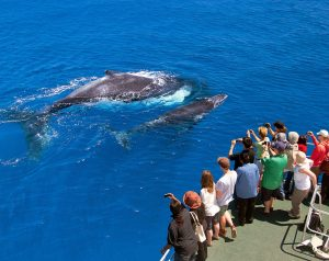 Whale Watching Western Australia