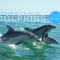 Swim with Wild Dolphins on sale Perth